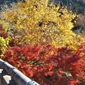 Photos: 八幡川の紅葉@御調八幡宮
