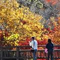 Photos: 八幡川の彩り@御調八幡宮