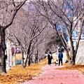 Photos: 冬の散歩道