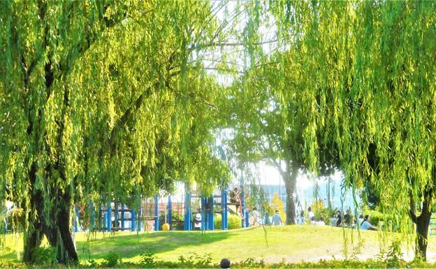 柳青める公園の午後