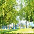 Photos: 柳青める公園の午後