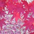 晩秋の紅葉風景