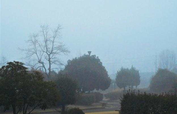 濃霧注意報の出た朝景2020.2.13