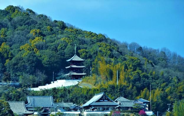 春の空に向かって@西國寺・三重塔