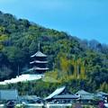 Photos: 春の空に向かって@西國寺・三重塔