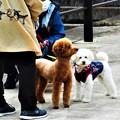 Photos: 散歩道のワンコたち
