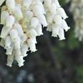 Photos: 樹木に咲く 白い花@びんご運動公園
