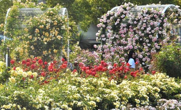 薔薇のアーチのある花風景@ばら公園