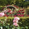 Photos: 風薫る五月の薔薇@福山ばら公園