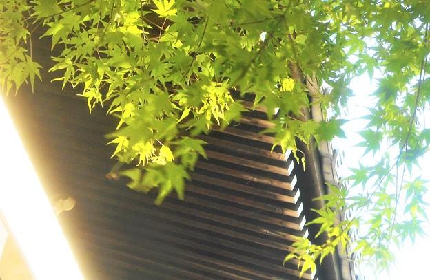 新緑の候@峯の薬師堂@瑠璃山