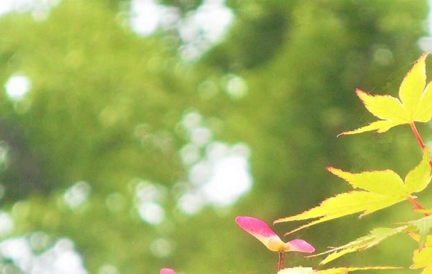 新緑の候に初夏の風@びんご広域運動公園