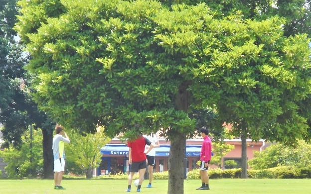 初夏の芝生公園の午後@梅雨の晴れ間