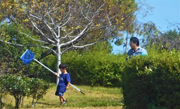 Photos: 日曜日は蝶などを追いかけて遊ぶ@秋の4連休