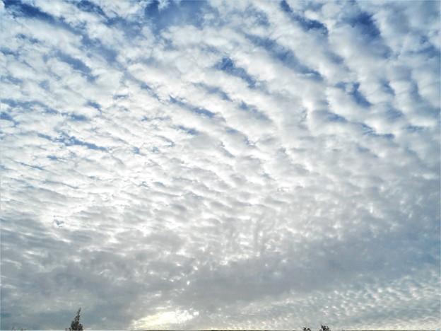 今朝の秋雲@瀬戸内海の ウロコ雲@巻積雲・鰯雲・鯖雲