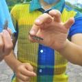 Photos: 小学生は昆虫が大好き@トノサマバッタ