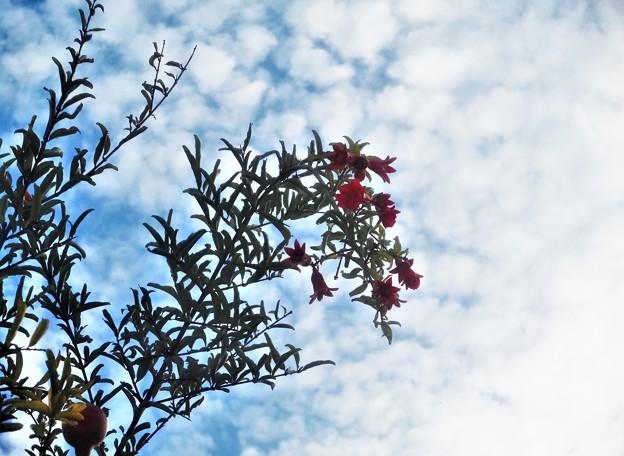 柘榴の花と実と秋の空