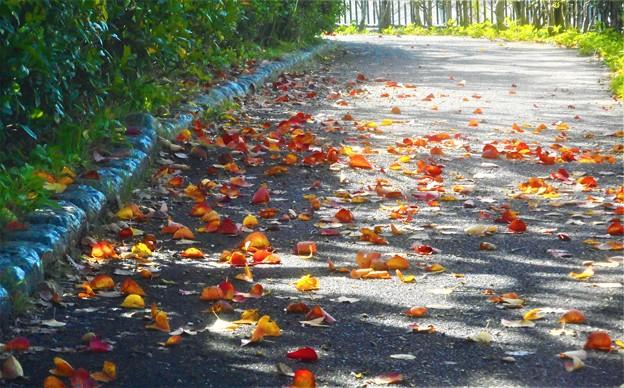 落ち葉の散歩道@文化の日
