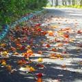 Photos: 落ち葉の散歩道@文化の日