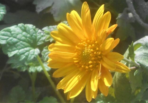 畑に咲く 黄色い花