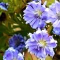 師走に咲く花