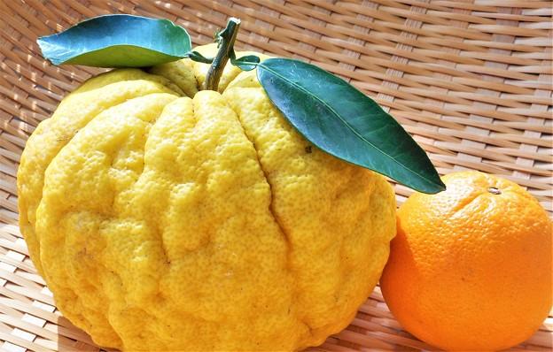 冬至も近い@獅子ゆずとネーブルオレンジ