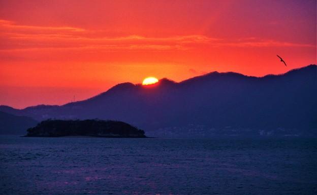 Photos: 新春の落陽@クジラ島にカモメ飛ぶ21.1.13