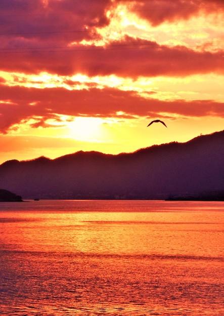 新春の夕陽とカモメ@瀬戸内海21.1.27