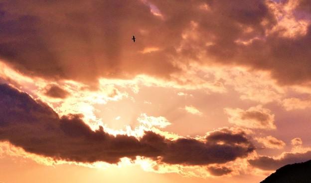 光芒のなか@アオサギの飛翔@瀬戸内海sunset