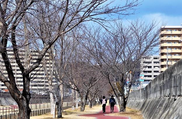 冬の散歩道@21.2.18