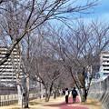 Photos: 冬の散歩道@21.2.18