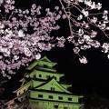 写真: 城と夜桜