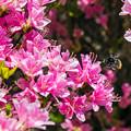 写真: 春爛漫-2