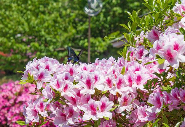 写真: 春爛漫-1