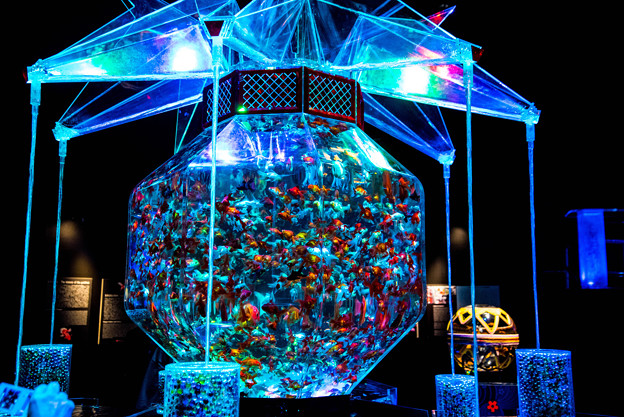 Art aquarium (2)