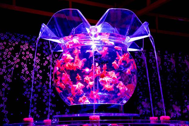 Art aquarium (9)