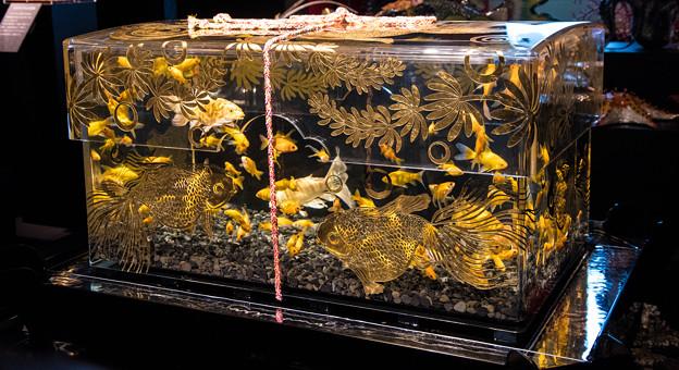 玉手箱 Art aquarium (10)