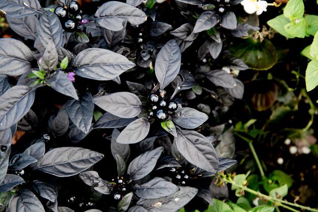 黒い装い 1