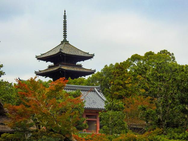 京都 初秋 5
