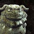 Photos: 鎮る狛犬