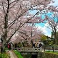 花の賑わう桜の道
