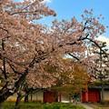 賑わい桜春の寺