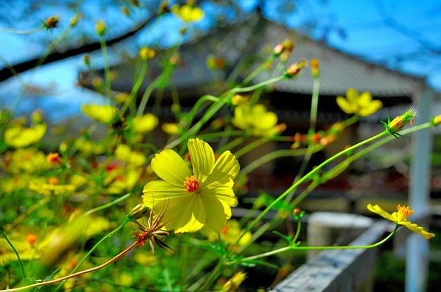 快晴に賑わう秋の花