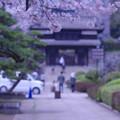 桜と櫓門前