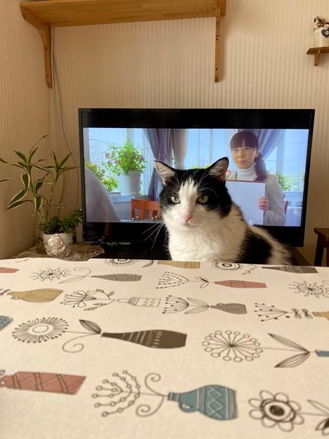 最近、テレビ見るのが好きなんです