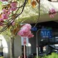 桜注意(笑)