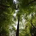 写真: 木々の癒しを感じて