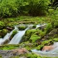 苔の森にて涼を感じる