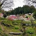 写真: 山奥の桃源郷