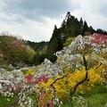 写真: 春の合奏
