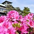 Photos: つつじの館